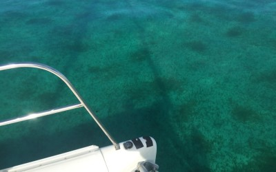 A Day on the Reef-Abaco Reef Video