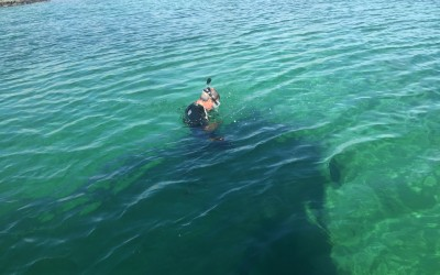 Deep Diving IN Shallow Water