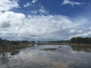 Another salt pond