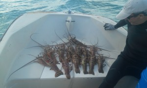 Fishing for Lobsters in Hopetown Bahamas